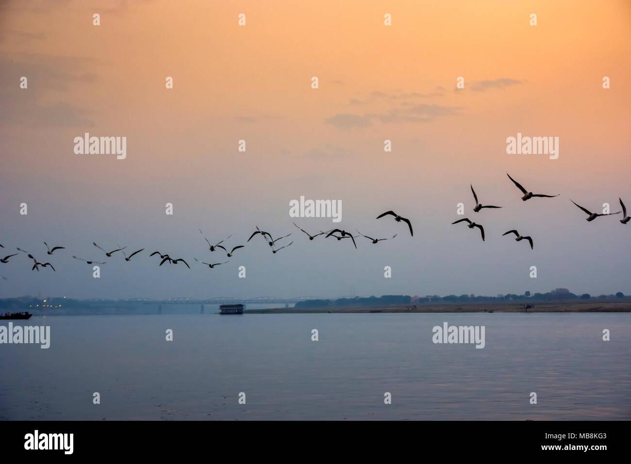 Ein Vogelschwarm fliegt über den Ganges bei Sonnenuntergang an Varanesi, Uttar Pradesh, Indien Stockbild