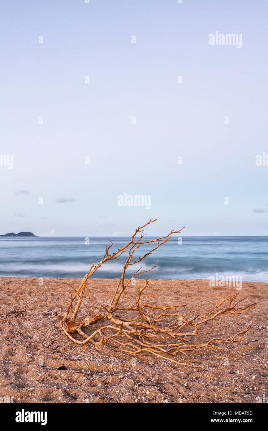 Trockene Ast auf dem Sand bei armação Strand am Abend. Florianopolis, Santa Catarina, Brasilien. Stockbild