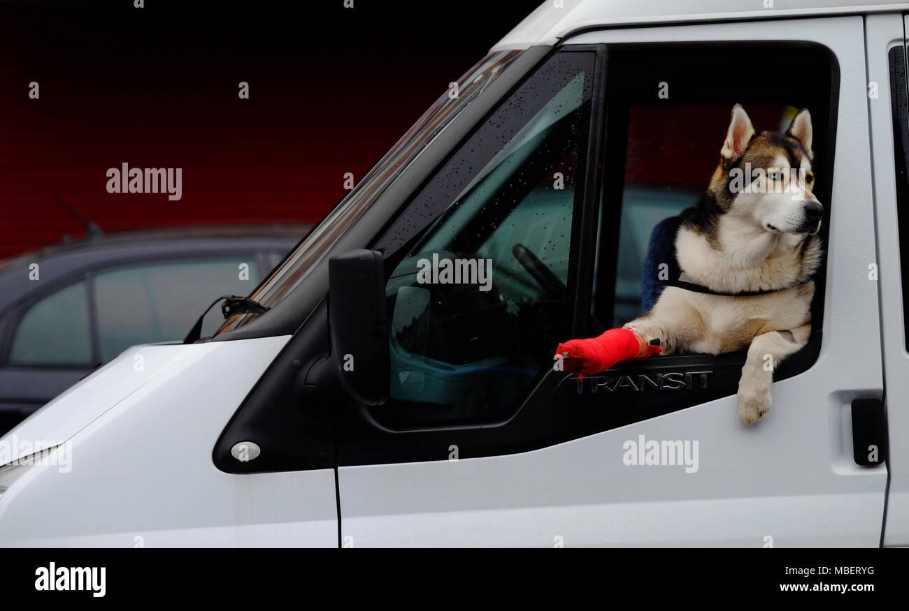 Gebrochen hund gips bein Hilfe! Hund