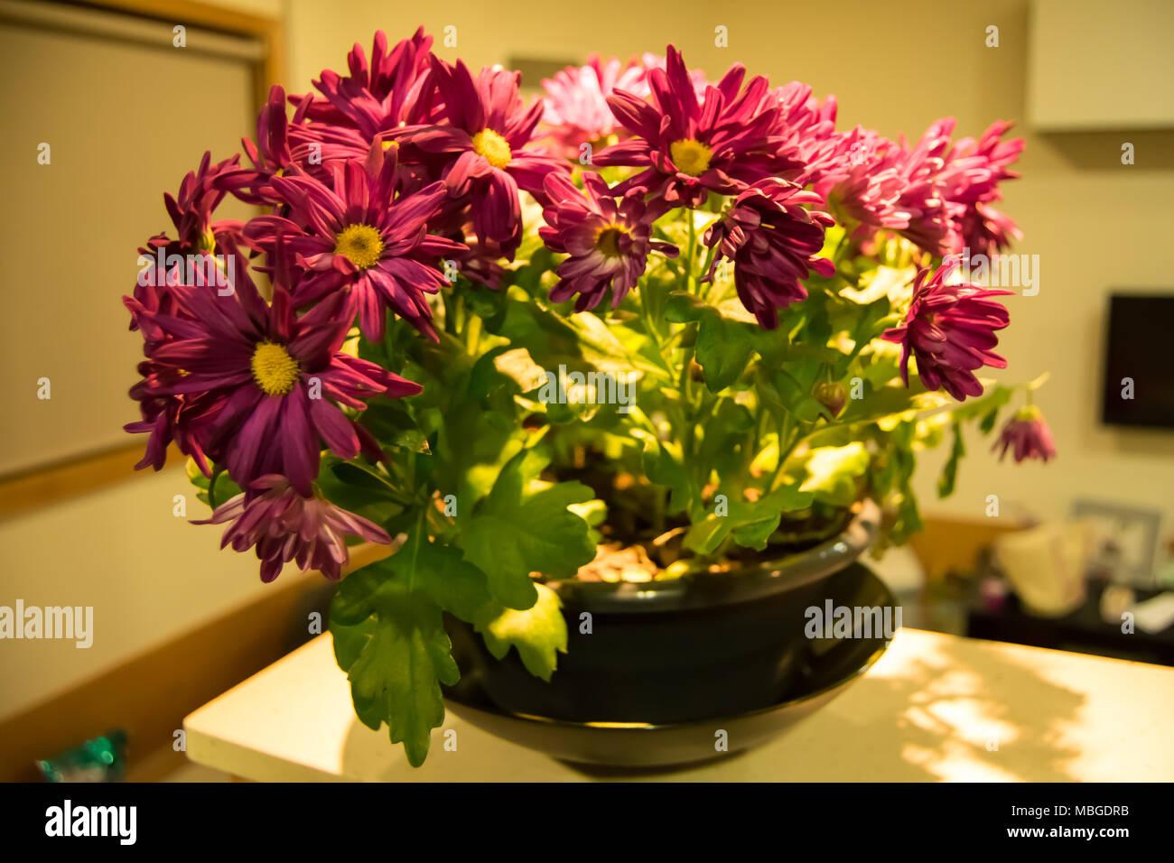 Innenraum Blumen Stockbild