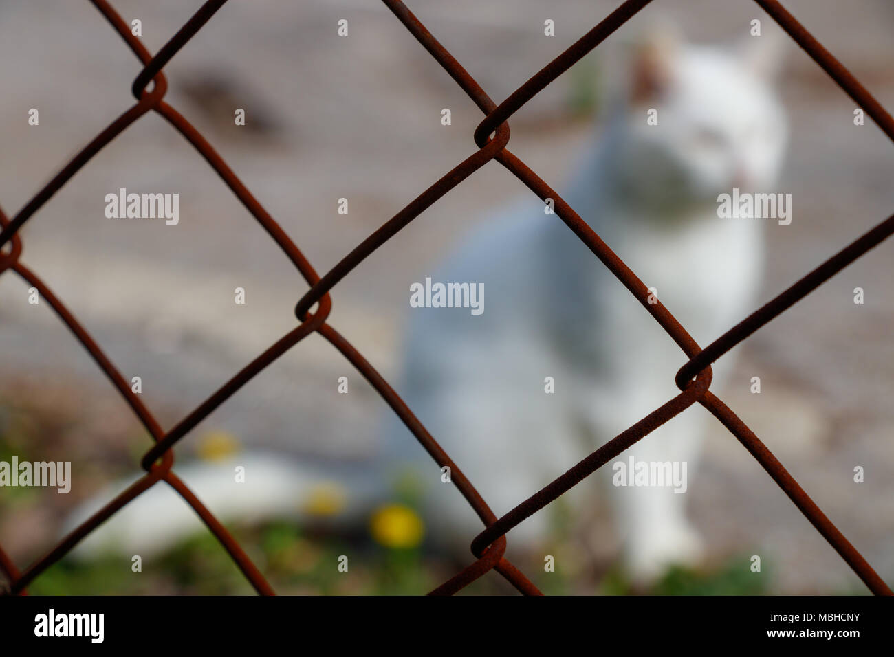 Zaun Draht Hintergrund Weisse Katze Stockfoto Bild 179248103 Alamy