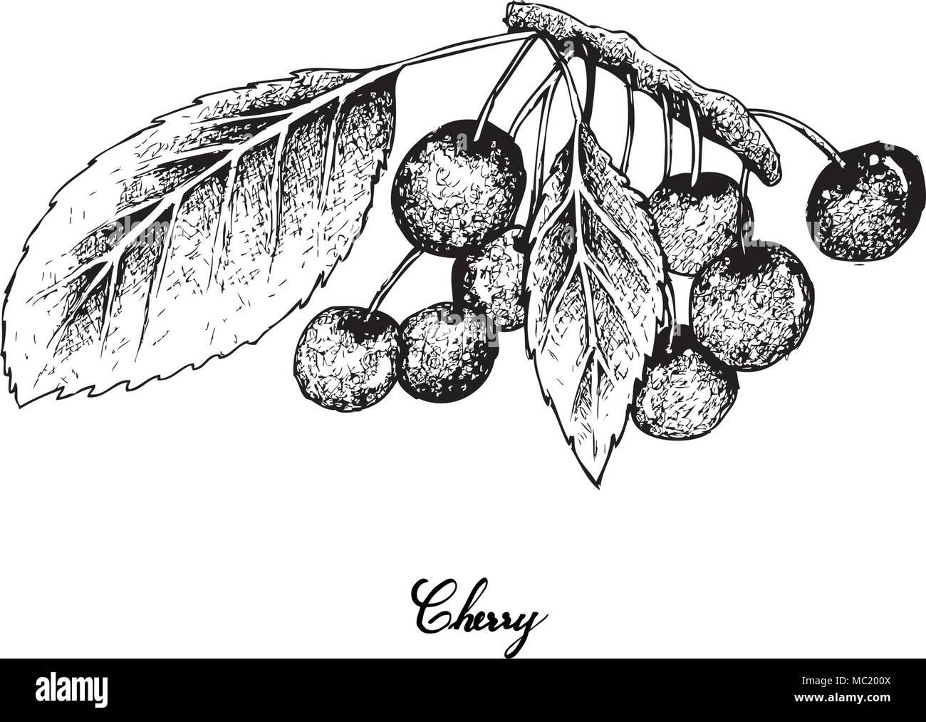 Tropische Früchte Illustration Von Hand Gezeichnete Skizze Frische