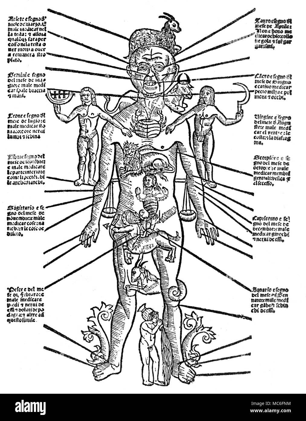 Wunderbar Teile Des Körpers Externen Bilder - Menschliche Anatomie ...