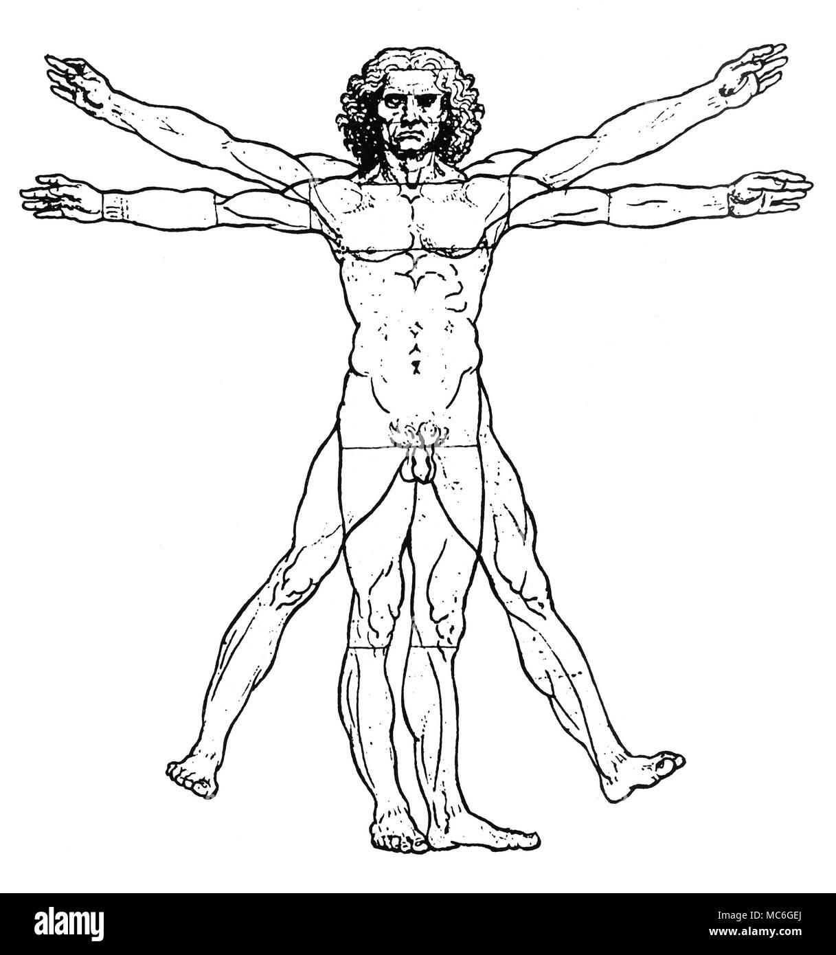 Berühmt Anatomie Des Menschen Für Den Künstler Fotos - Anatomie ...