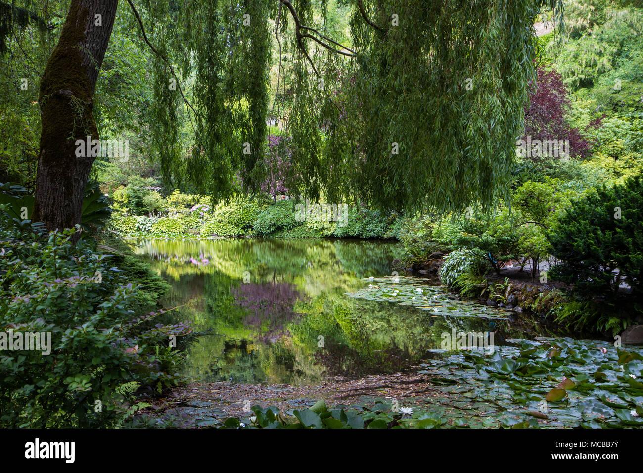 Eine Trauerweide Hängt über Einem Kleinen Teich Das