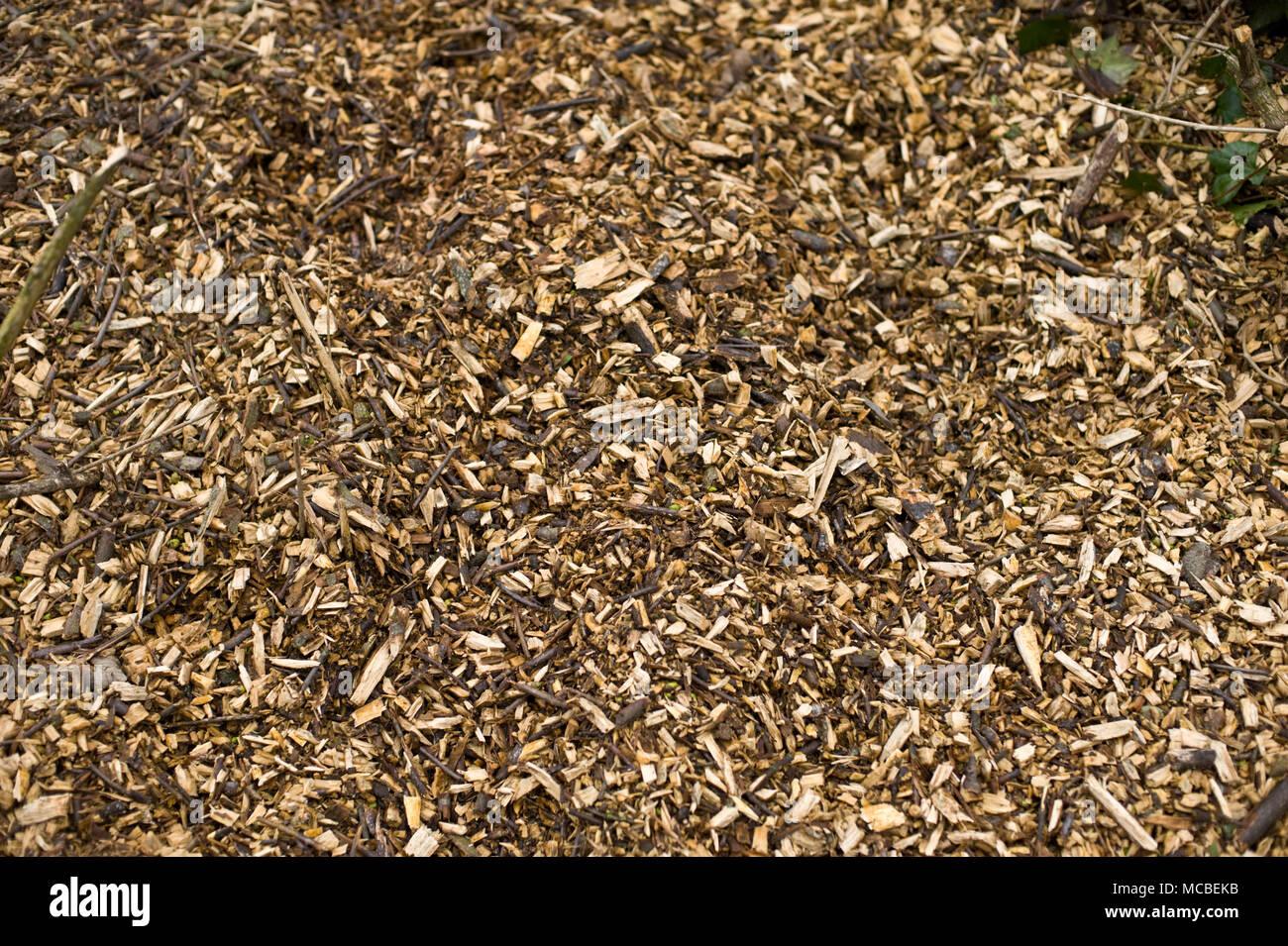 Abgebrochene Bäume nach dem Fällen arbeiten in Hay-on-Wye Powys Wales UK Stockbild