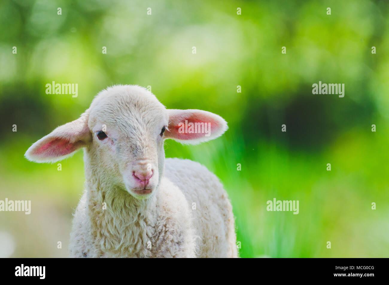 Fein Jesus Lamm Färbung Seite Fotos - Druckbare Malvorlagen ...