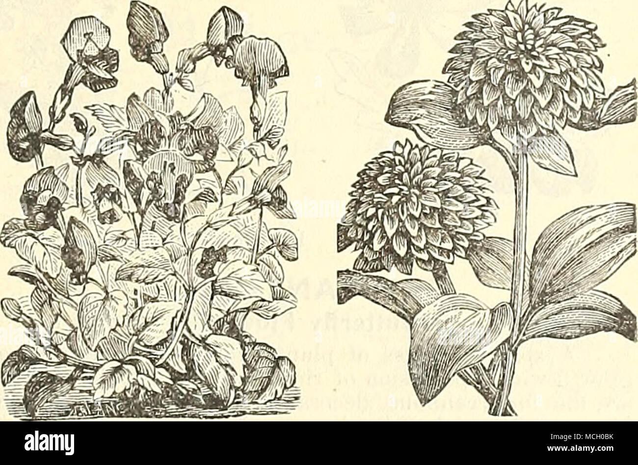 Fantastisch Pflanzen Fur Steingarten Schatten Bilder - Schlafzimmer ...