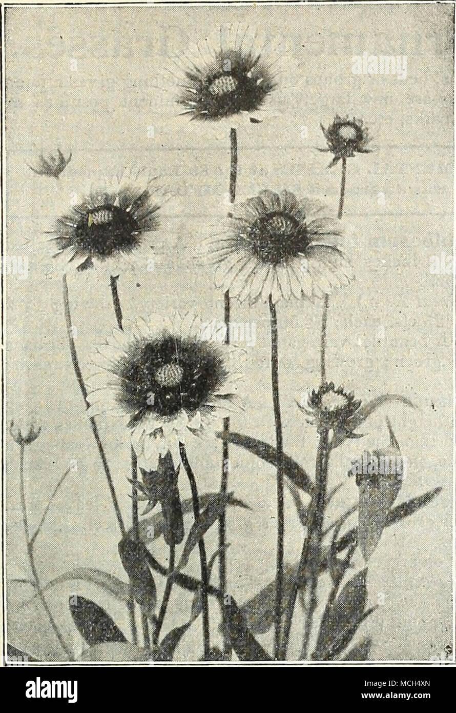 Ausgezeichnet Pflanzen Fur Steingarten Schatten Bilder - Die ...