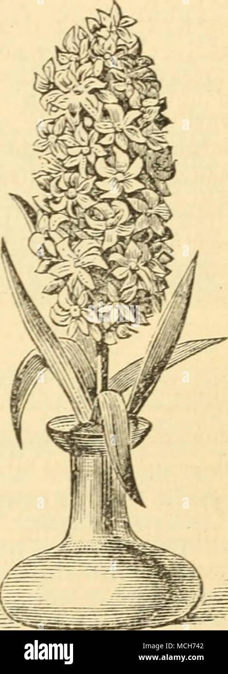 Pin by sobia tanveer on Smartphone-Hintergrundbild | Watercolor flowers,  Botanical flowers, Flower painting