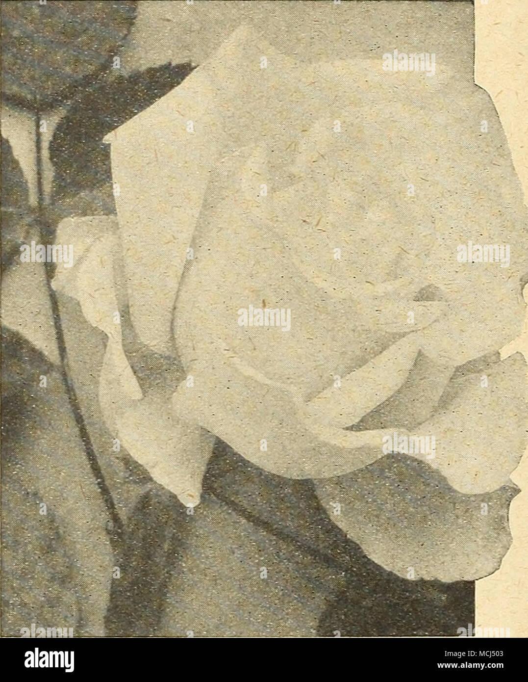 Berühmt Malvorlagen Aus Den Vereinigten Staaten Fotos - Druckbare ...