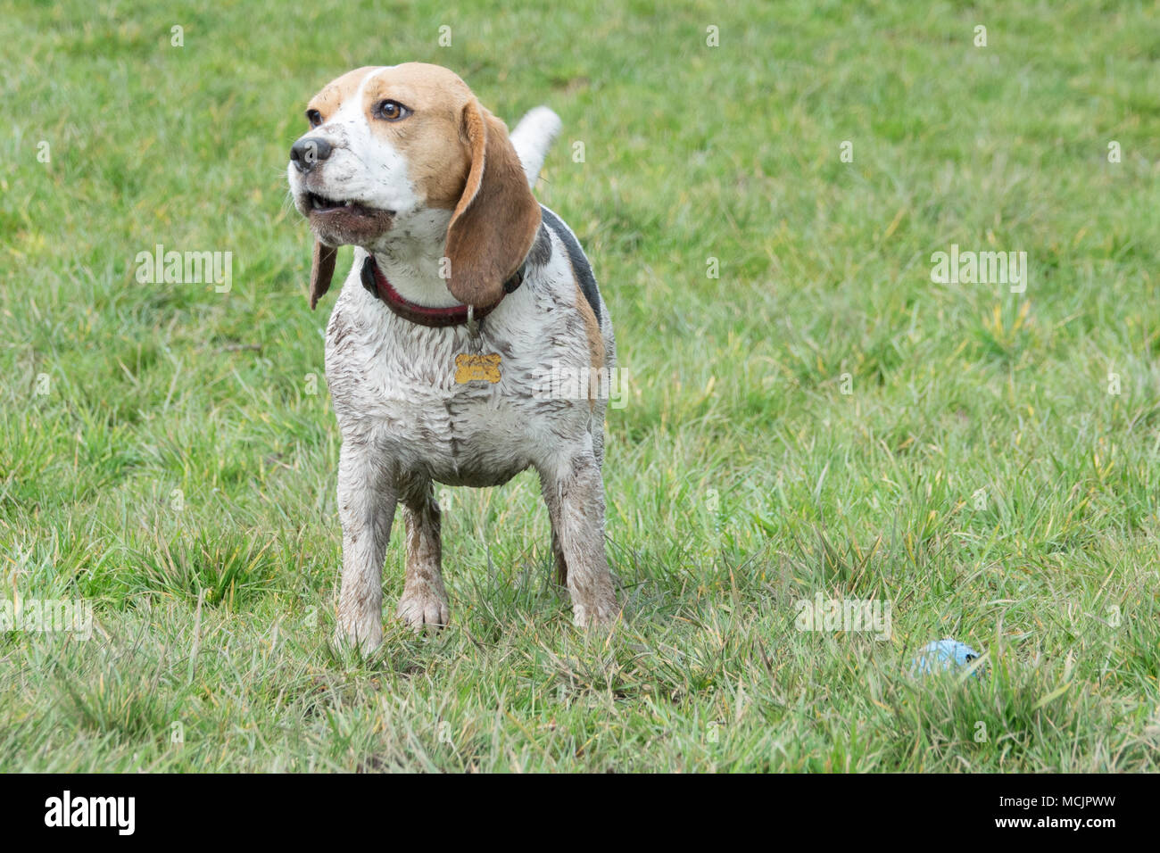 Dog In Rope Stockfotos & Dog In Rope Bilder - Seite 2 - Alamy