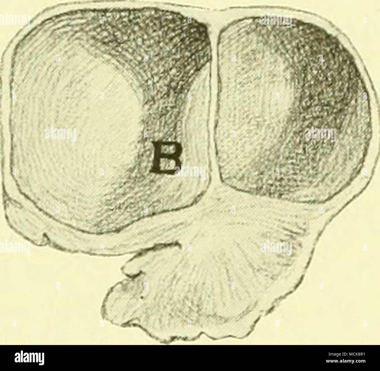 Groß Oberfläche Anatomie Des Gesichts Zeitgenössisch - Physiologie ...