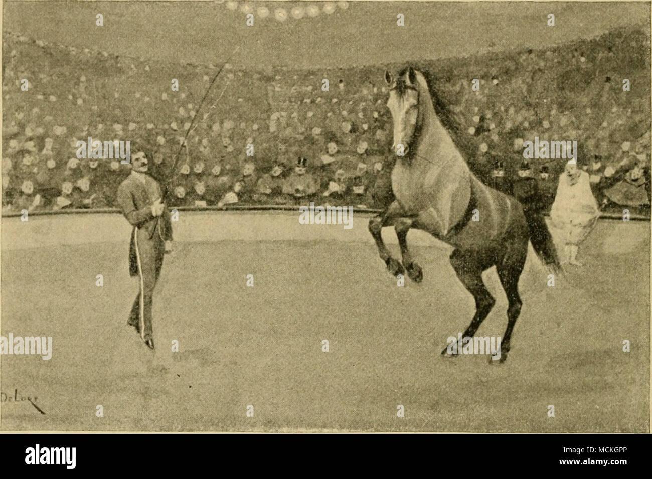 For Third Circus Stockfotos & For Third Circus Bilder - Alamy