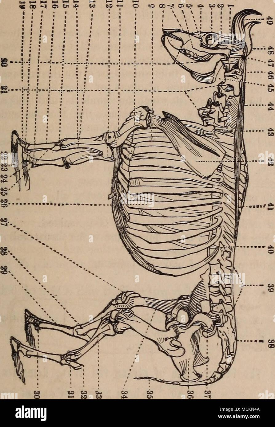 Temporal Bone Stockfotos & Temporal Bone Bilder - Seite 2 - Alamy