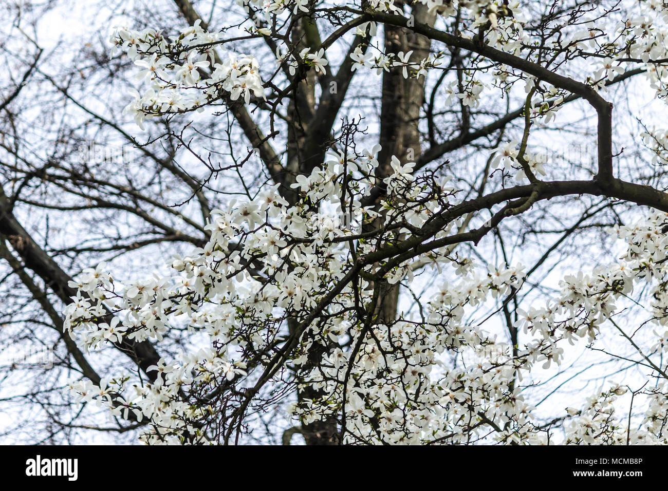 Niedlich Baum Färbung Ideen - Malvorlagen Ideen - blogsbr.info
