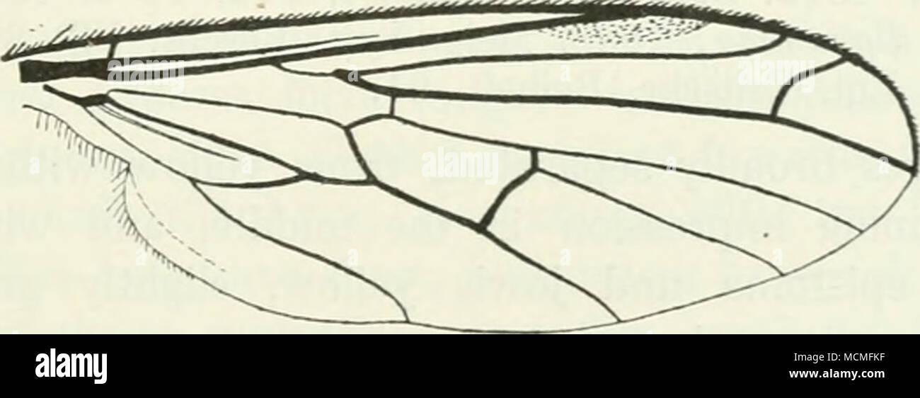 Abb. 23. Flügel der E.stercorea. Segmente. Männliche Genitalien ...