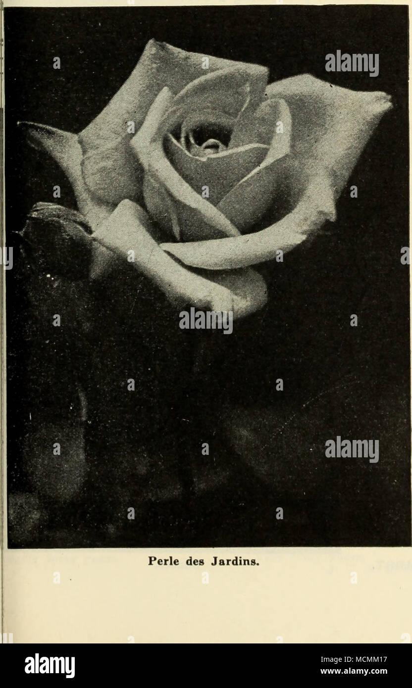 Exqui Stockfotos & Exqui Bilder - Alamy