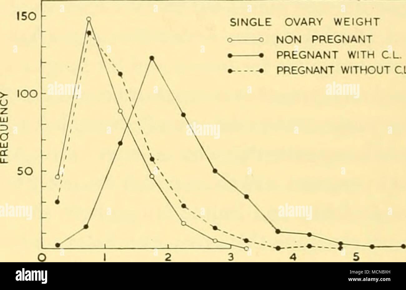 schwanger single