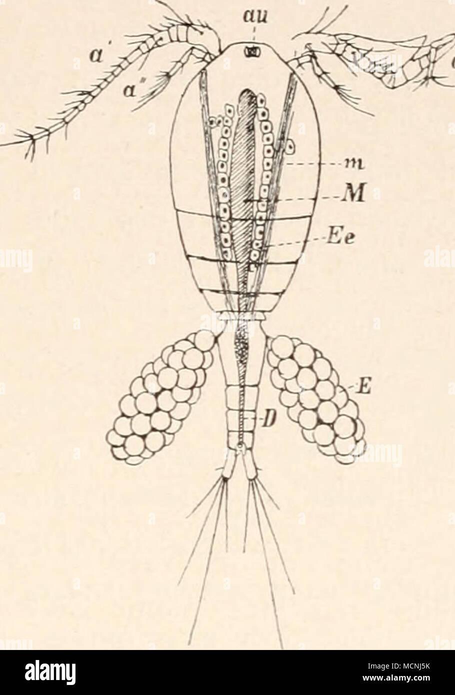 Ausgezeichnet Teile Der Eileiter Anatomie Galerie - Anatomie Ideen ...