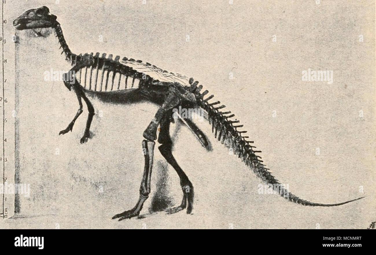 Tolle Dinosaurier Skelett Färbung Seite Bilder - Druckbare ...