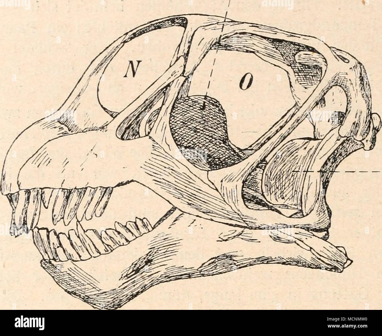 Charmant Makroskopische Anatomie Des Knochens Galerie - Anatomie Von ...