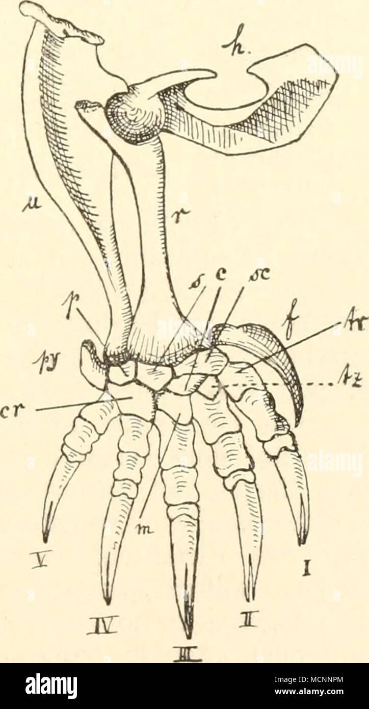Großzügig Sprache Und Hören Wissenschaft Anatomie Und Physiologie ...
