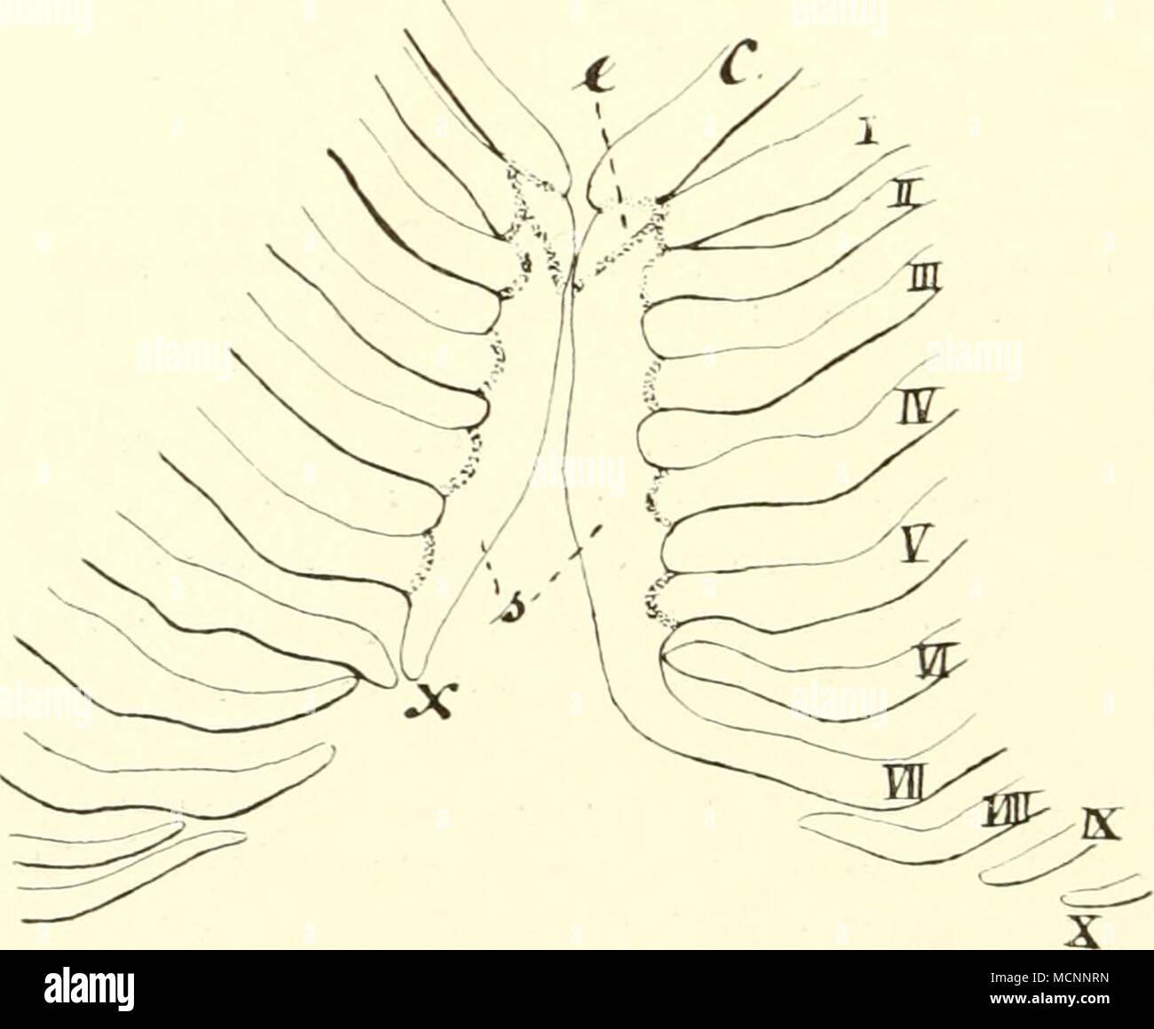 Schön Anatomie Und Physiologie 9. Auflage Laborhandbuch Fotos ...