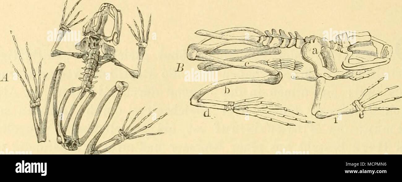Ungewöhnlich Unterarm Oberflächenanatomie Fotos - Menschliche ...