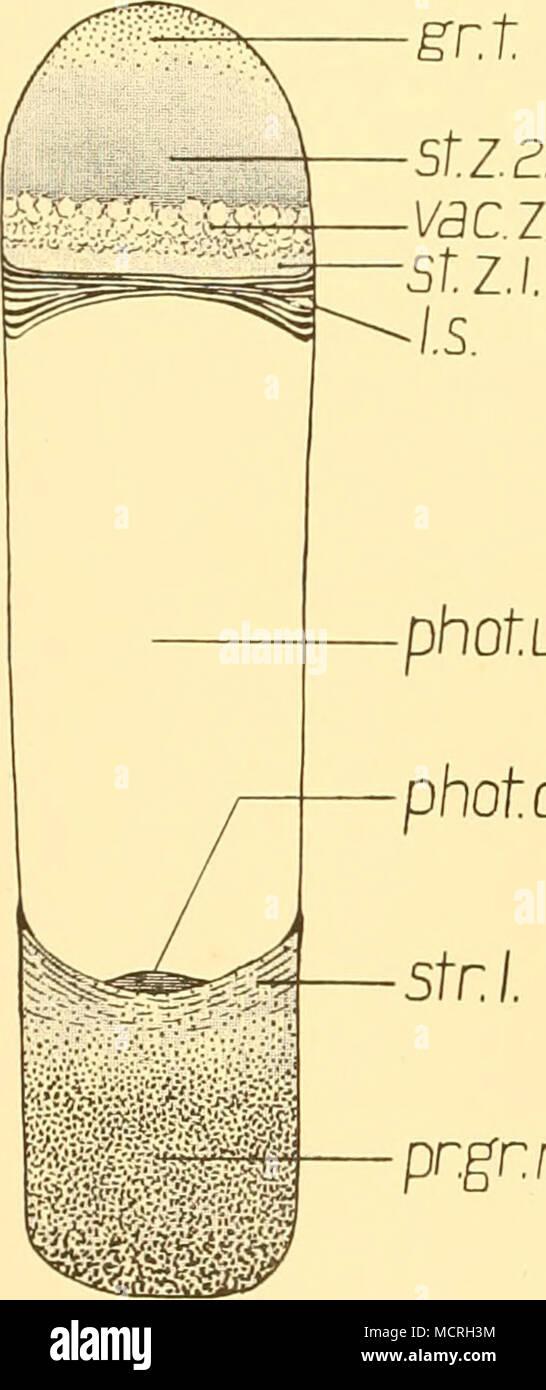 Fein Detailliertes Auge Anatomie Fotos - Anatomie Von Menschlichen ...
