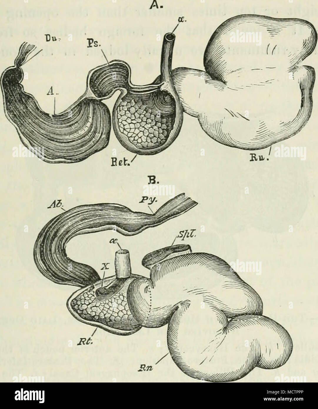 Ungewöhnlich Anatomie Des Magens Und Der Speiseröhre Bilder ...