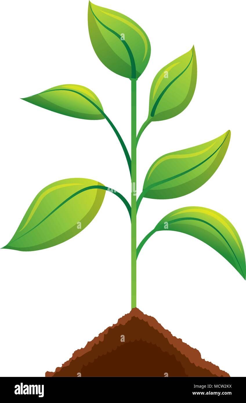 Kultivierte Pflanze Ökologie Symbol Stockbild