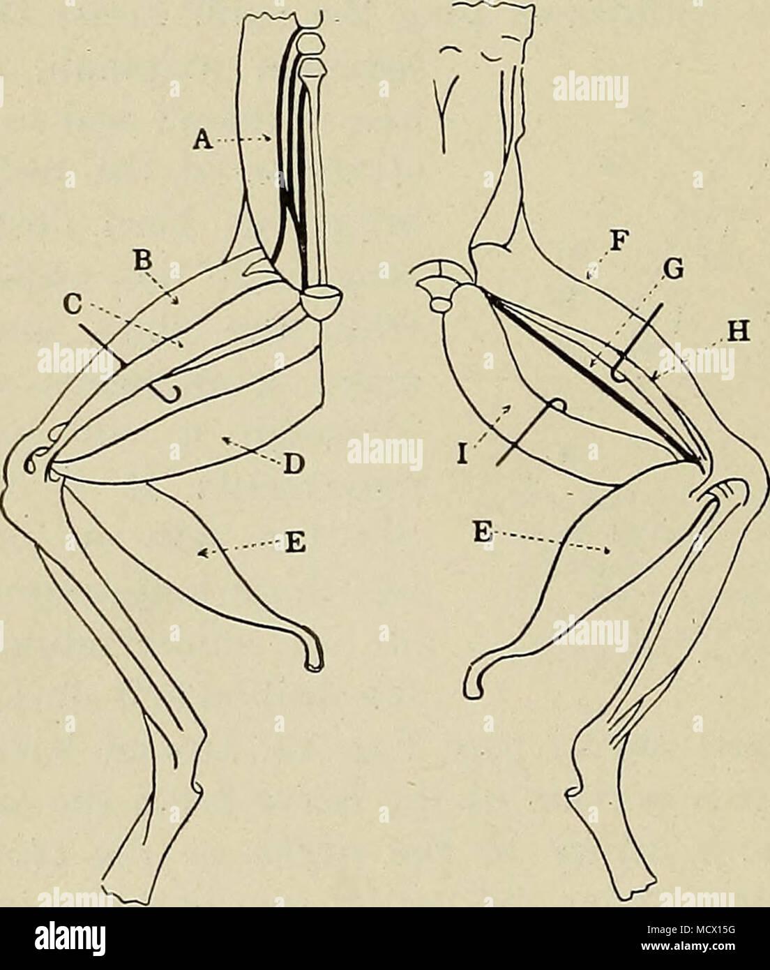 Ziemlich Bauch Oberflächenanatomie Zeitgenössisch - Menschliche ...