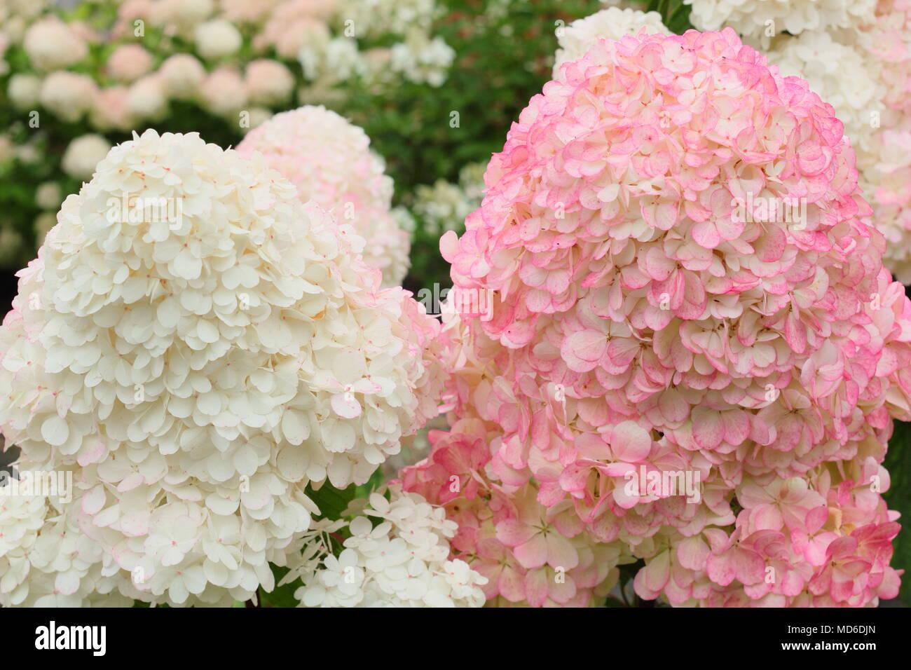 Vanille Stockfotos Vanille Bilder Alamy