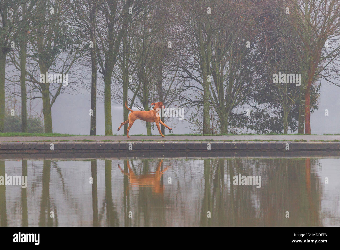 Northampton. UI.K. Ein nasser Morgen in Abington Park, Nebel und Regen für den Start in den Tag. Stockbild