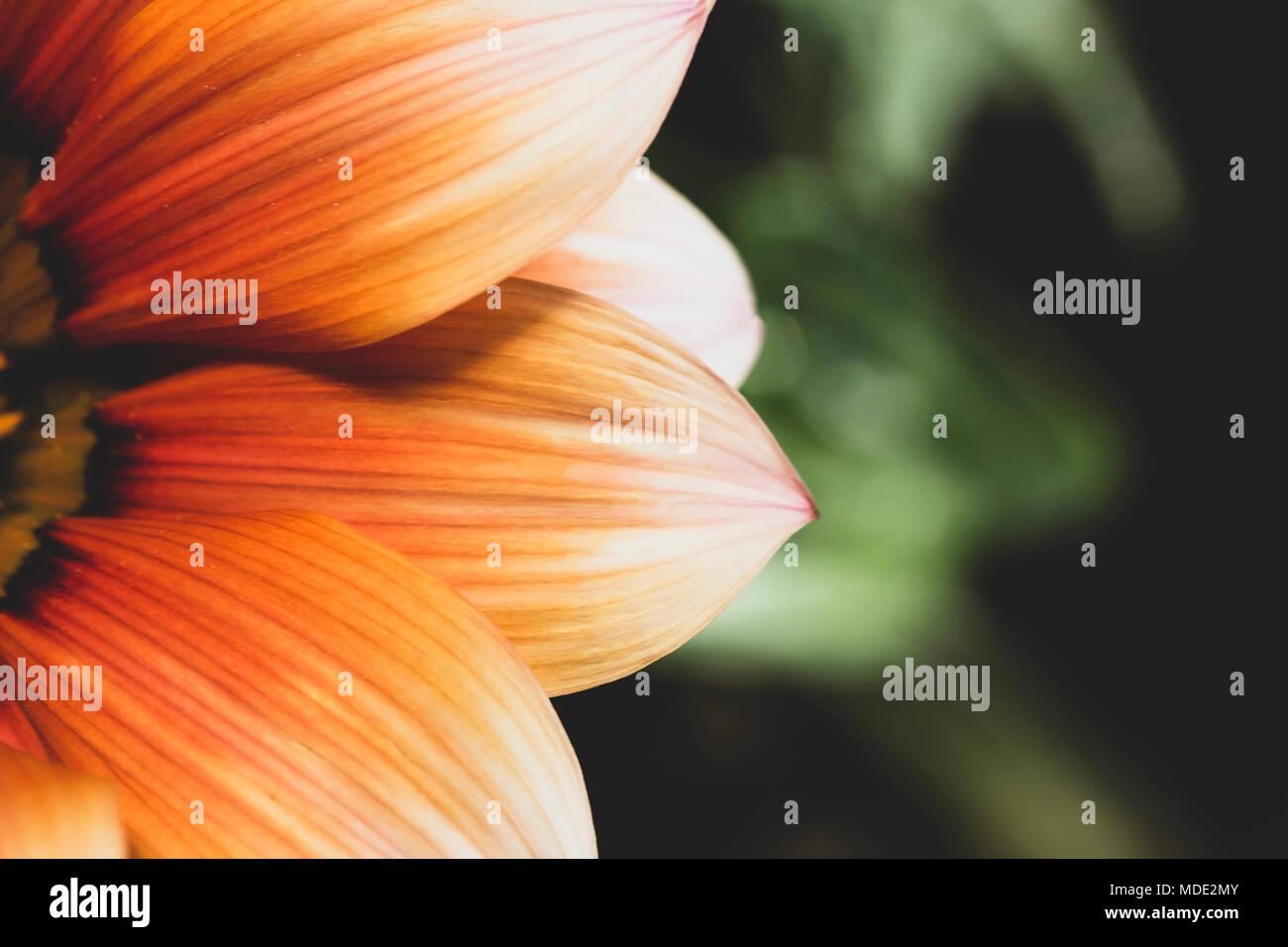 Nahaufnahme von Orange Blume, gedämpften Farben. Stockbild