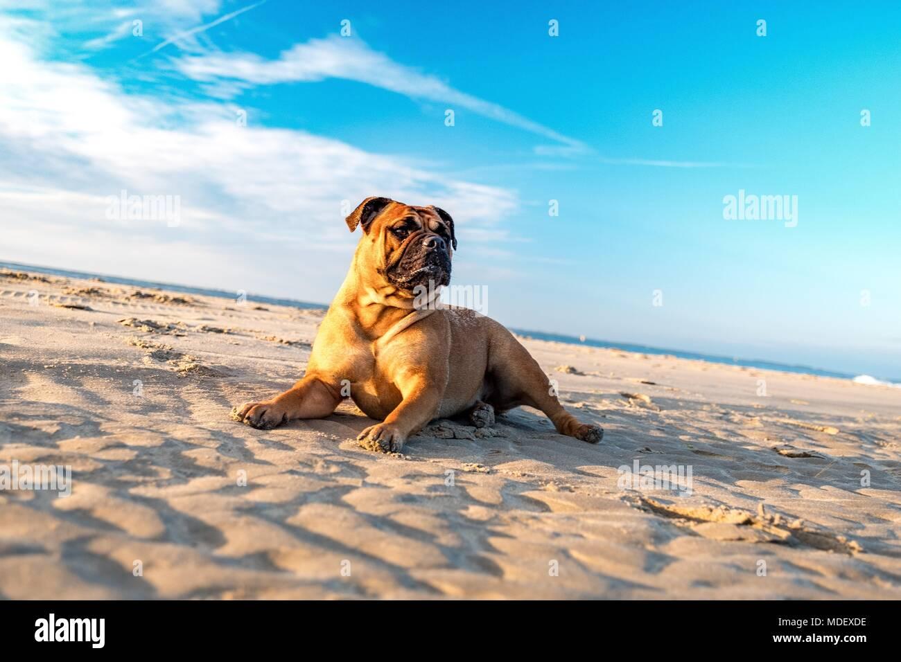 Hunde, die besten Freunde des Menschen Stockbild