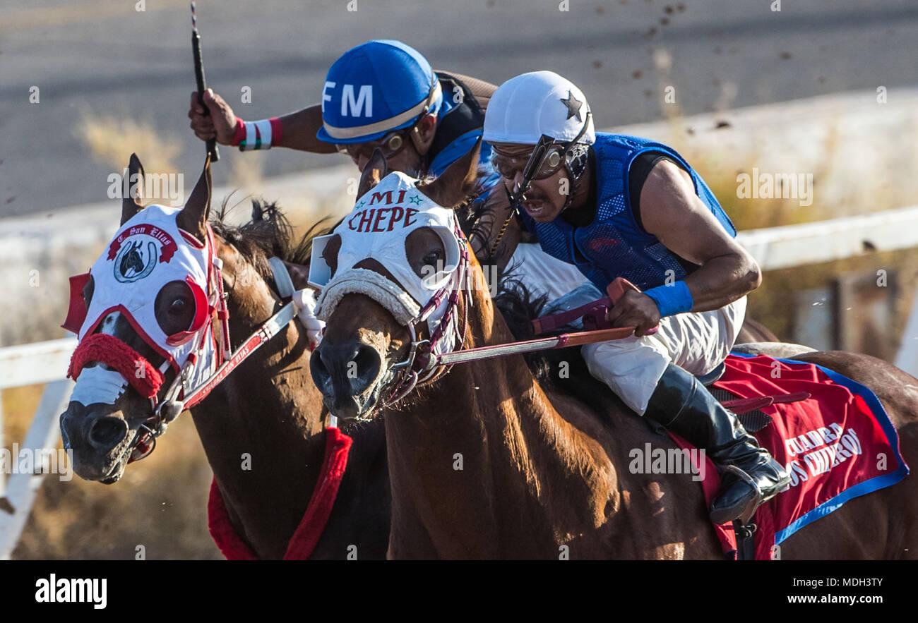 Pferderennen in der Sonnenuntergang am Hipodromo von Hermosillo, Sonora Mexico. Mexikanische Jungs versuchen, das Rennen zu gewinnen. Pferderennen, Horse Racing. Wetten. pferderennbahn Stockbild