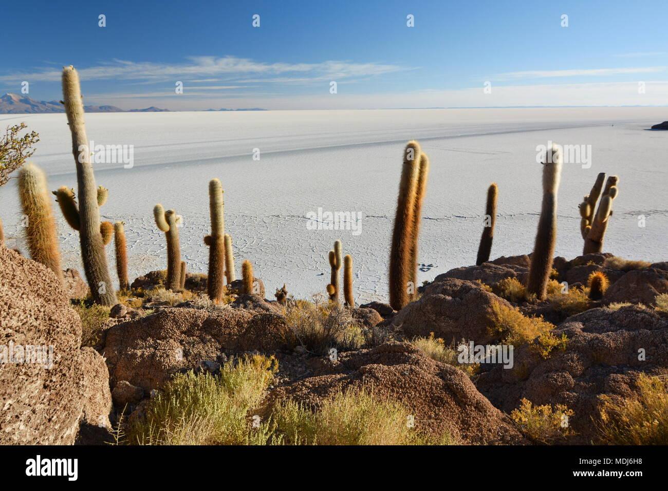 Blick von der Isla Incahuasi. Salar de Uyuni. Bolivien Stockbild