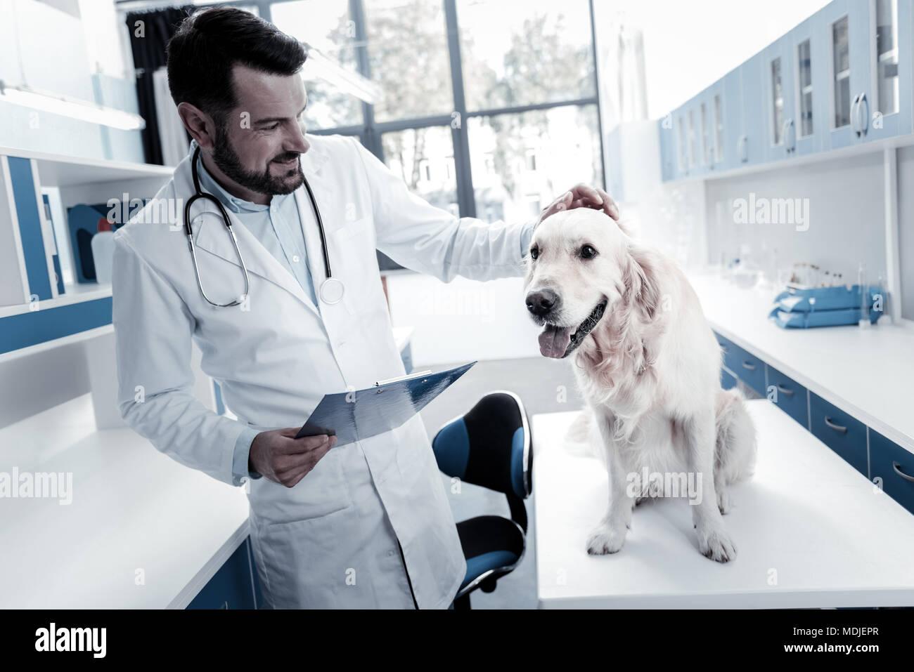Freundliche nette Tierarzt streichelte den Hund Stockbild