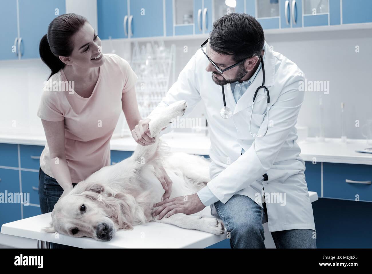 Nette junge Frau über ihren Hund sorgen Stockbild