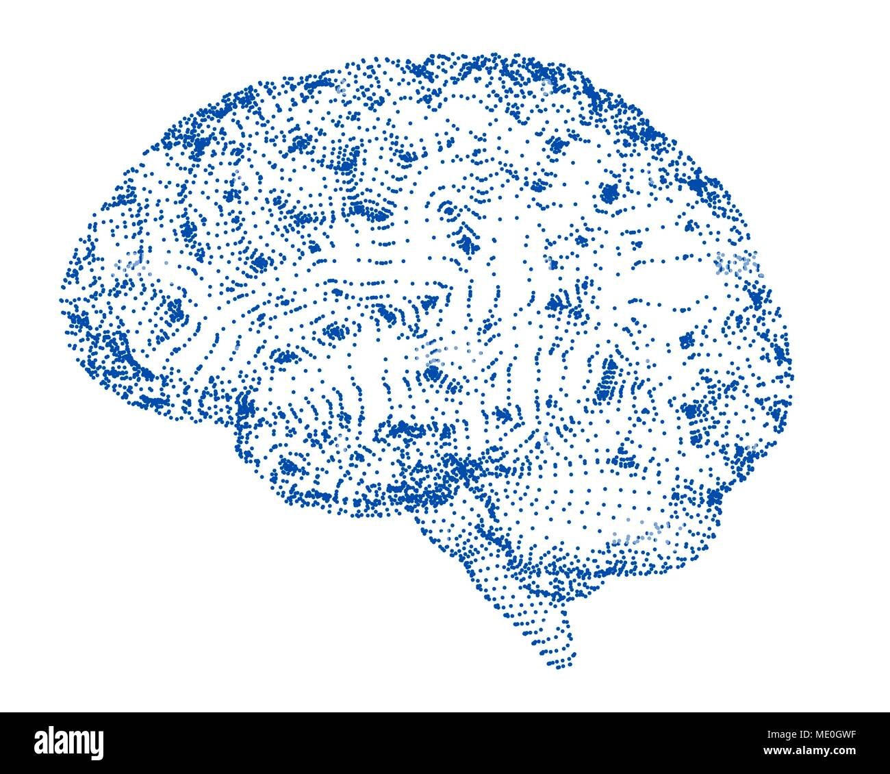 Cerebral Hemisphere Stockfotos & Cerebral Hemisphere Bilder - Seite ...