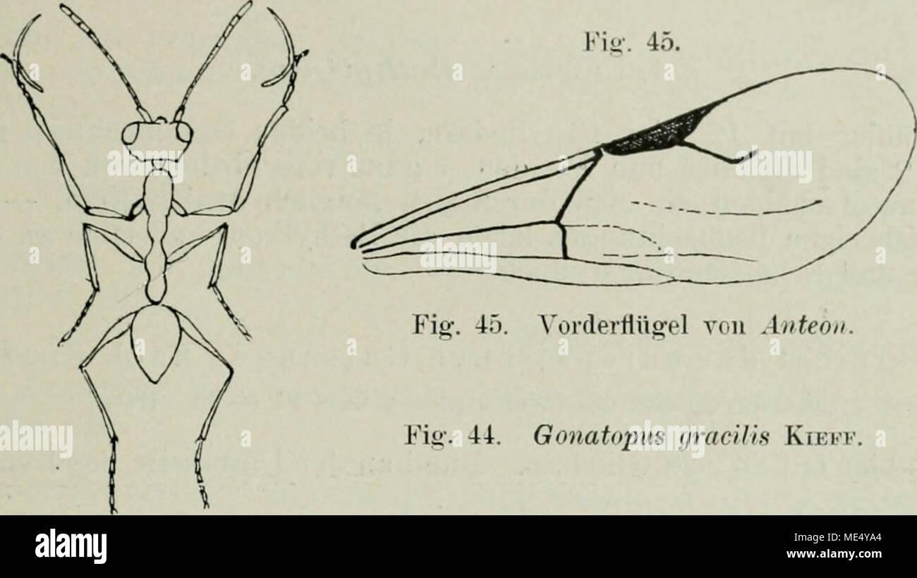 Groß Grau Anatomie übersicht Der Einzelnen Folgen Bilder - Anatomie ...