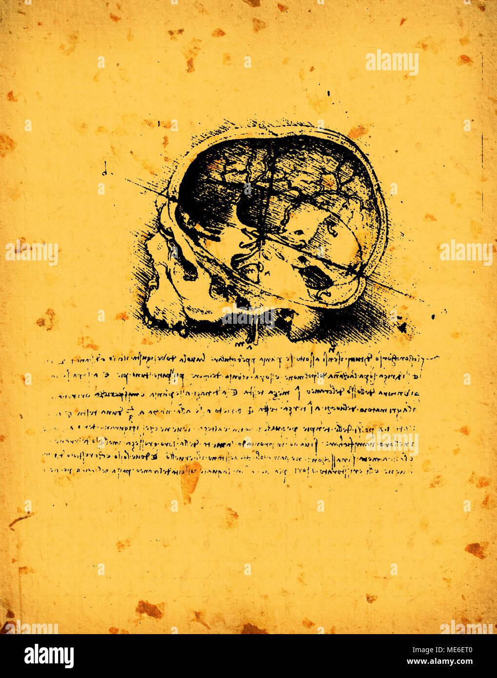 Anatomie-Kunst von Leonardo Da Vinci aus dem Jahr 1492 auf ...