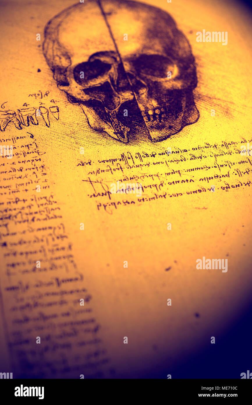 Anatomie Kunst von Leonardo Da Vinci von 1492 Stockfoto, Bild ...