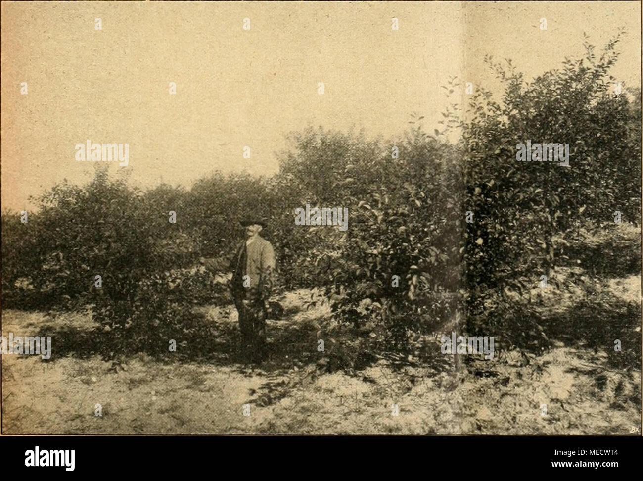 Kolonisten Stockfotos Kolonisten Bilder Alamy