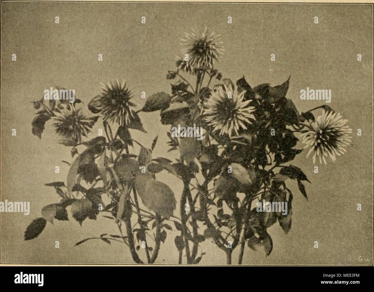 Wie Stockfotos & Wie Bilder - Seite 25 - Alamy