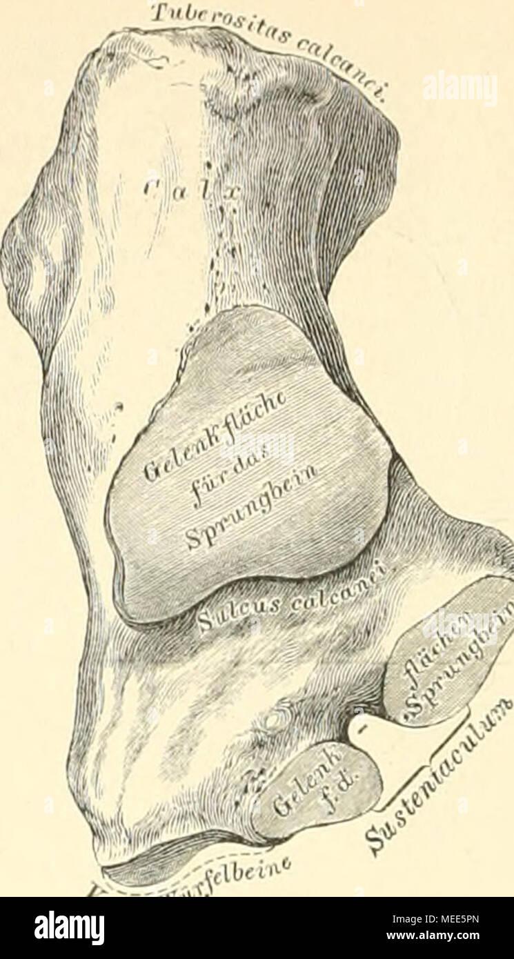 Ziemlich Kinn Anatomie Bilder - Menschliche Anatomie Bilder ...