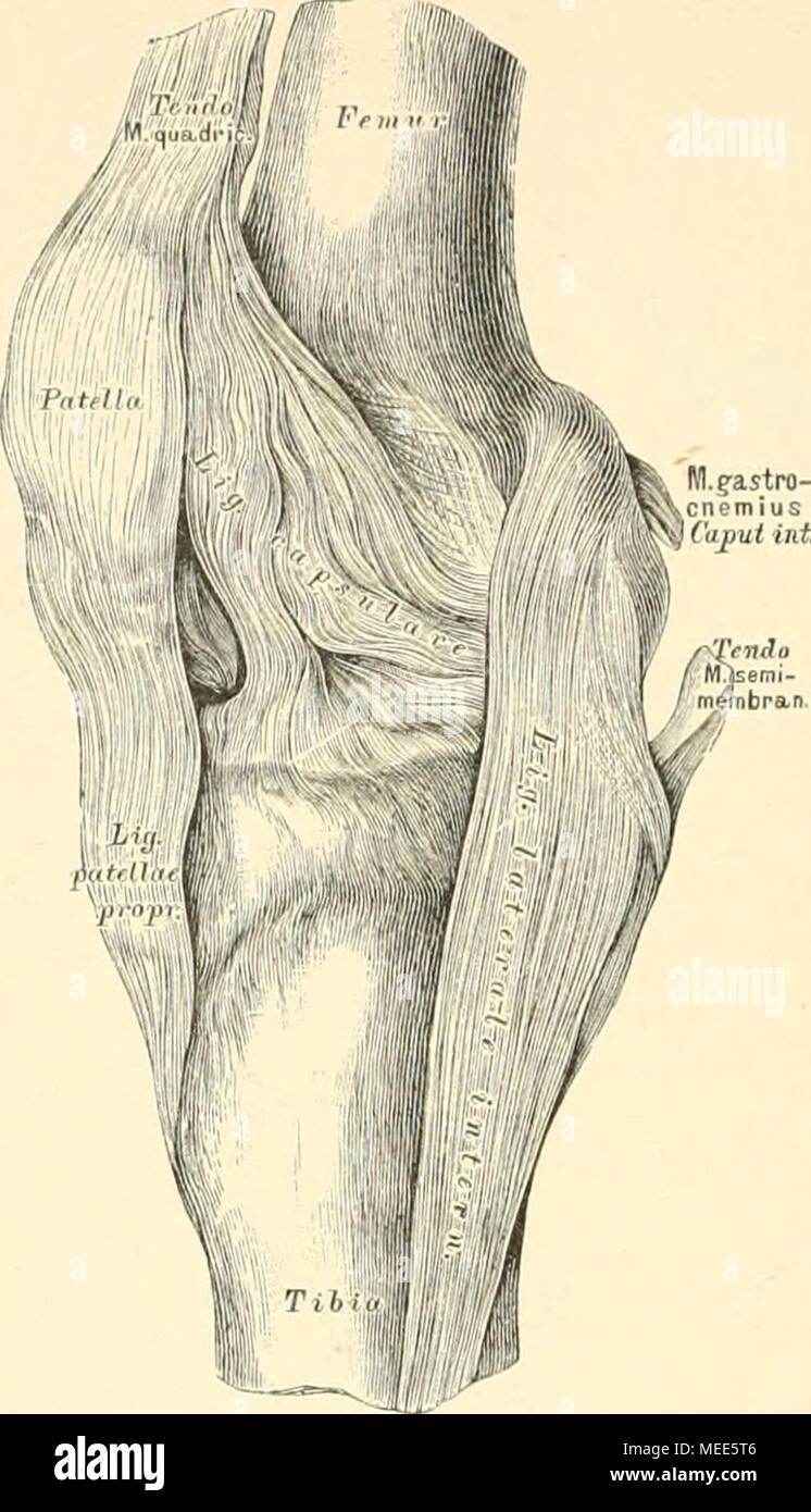 Ungewöhnlich Mcgraw Hill Verbinden Anatomie Und Physiologie Galerie ...