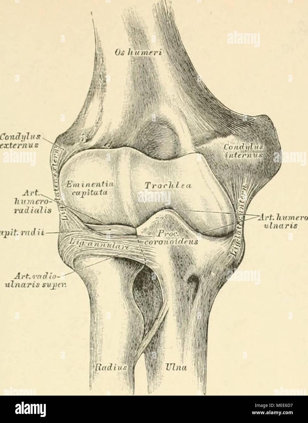 Groß Anatomie Des Rechten Beines Bilder - Menschliche Anatomie ...